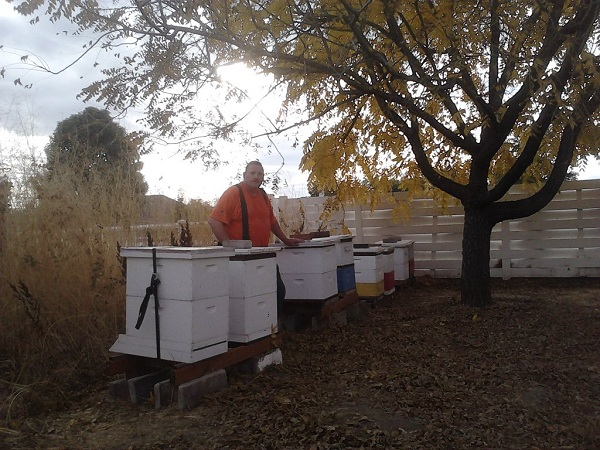 Tending to beehives